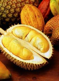Orkos_Durian